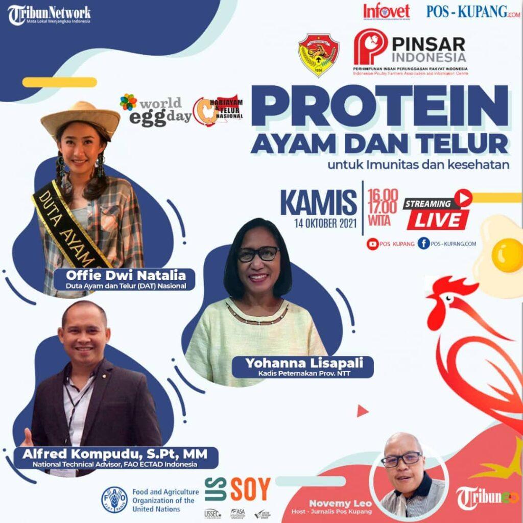 Protein Ayam Dan Telur Untuk Imunitas Dan Kesehatan